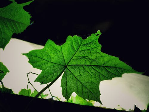 Gratis lagerfoto af blad, grøn, grønt blad, natur