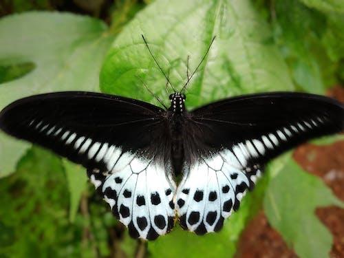 Gratis lagerfoto af flue, grøn, natur, nærbillede
