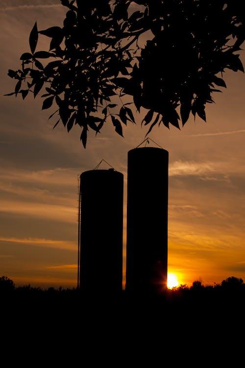 Foto stok gratis agbiopix, agrikultura, matahari terbenam, peternakan