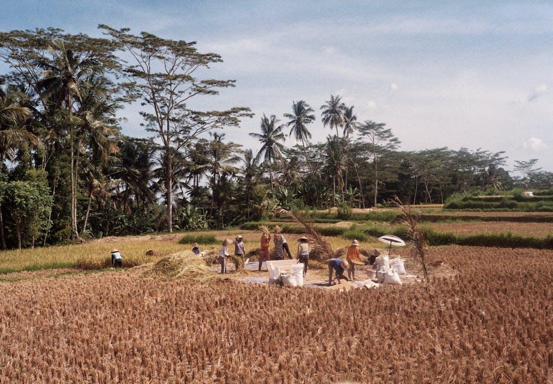 aratás, farm, földművelés