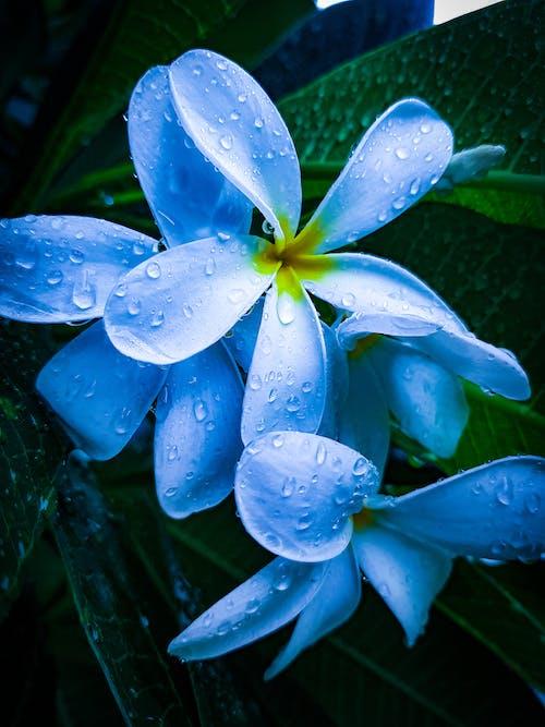 Ảnh lưu trữ miễn phí về cận cảnh, cánh hoa, danh lam thắng cảnh, đẹp