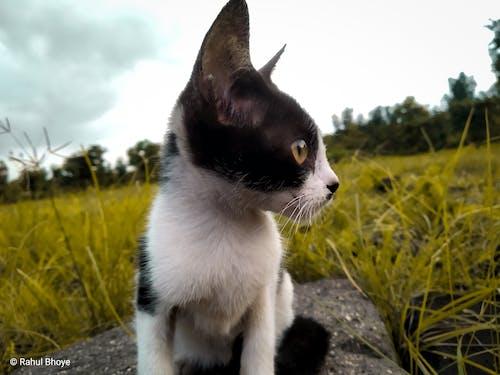 Безкоштовне стокове фото на тему «кішка, котяча мордочка»
