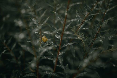 Gratis stockfoto met bladeren, blurry achtergrond, buiten, close-up