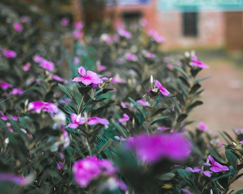 Free stock photo of beautiful flower, dark green plants, flower garden, flowers
