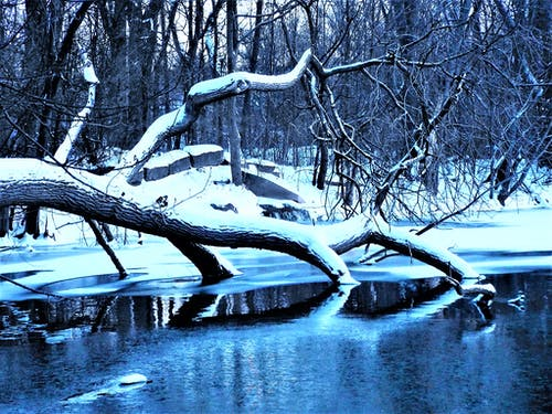 Bare Trees Near Body of Water