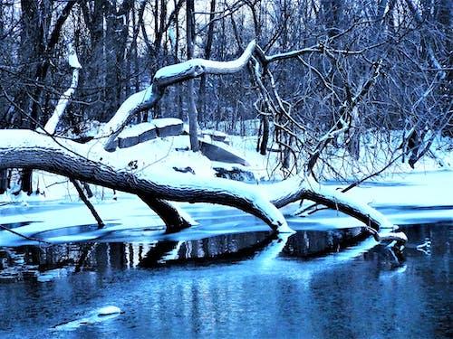 Ingyenes stockfotó befagyott, évszak, fa, fagy témában