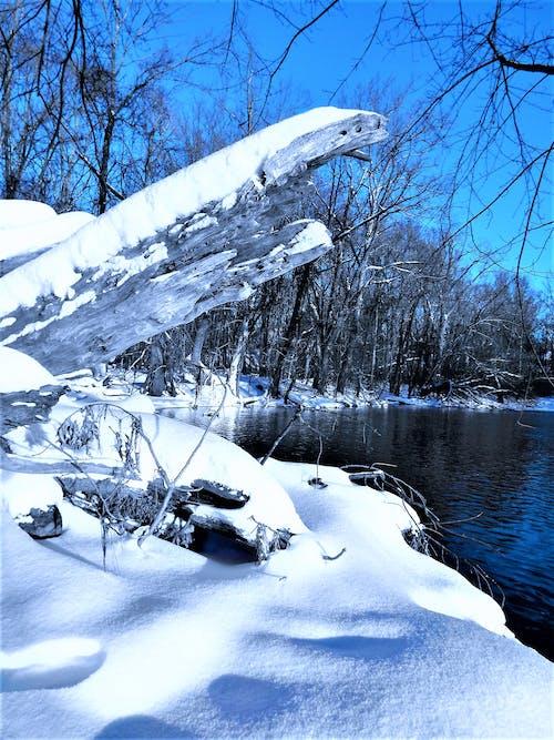 Immagine gratuita di acqua, alberi, boschi, congelato
