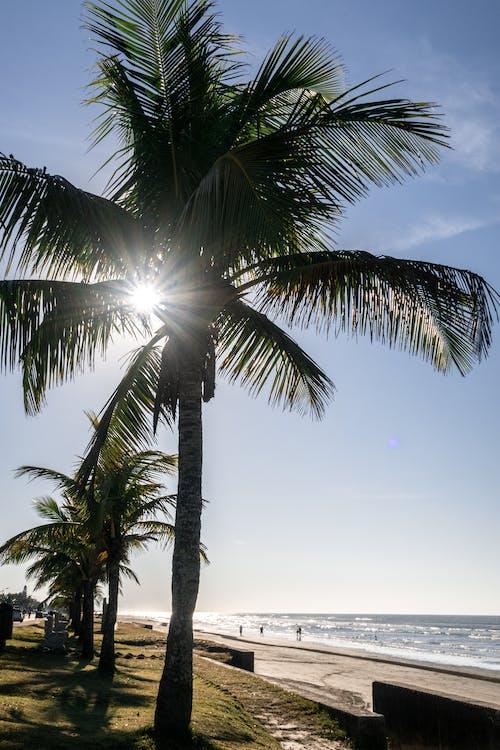 คลังภาพถ่ายฟรี ของ กลางวัน, ชายหาด, ดวงอาทิตย์, ต้นปาล์ม