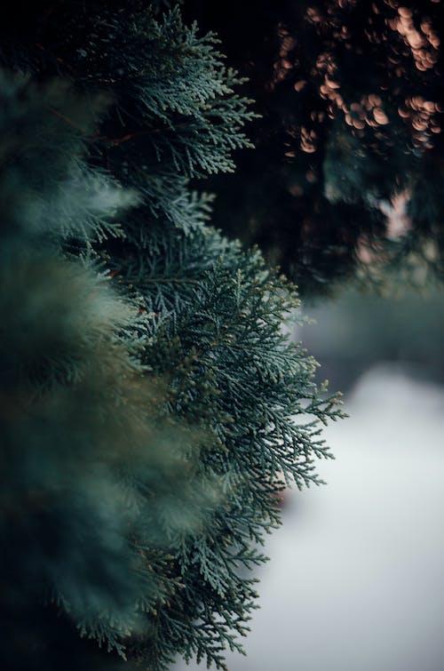 Základová fotografie zdarma na téma příroda, příroda pozadí, tmavě zelená, tmavě zelené rostliny