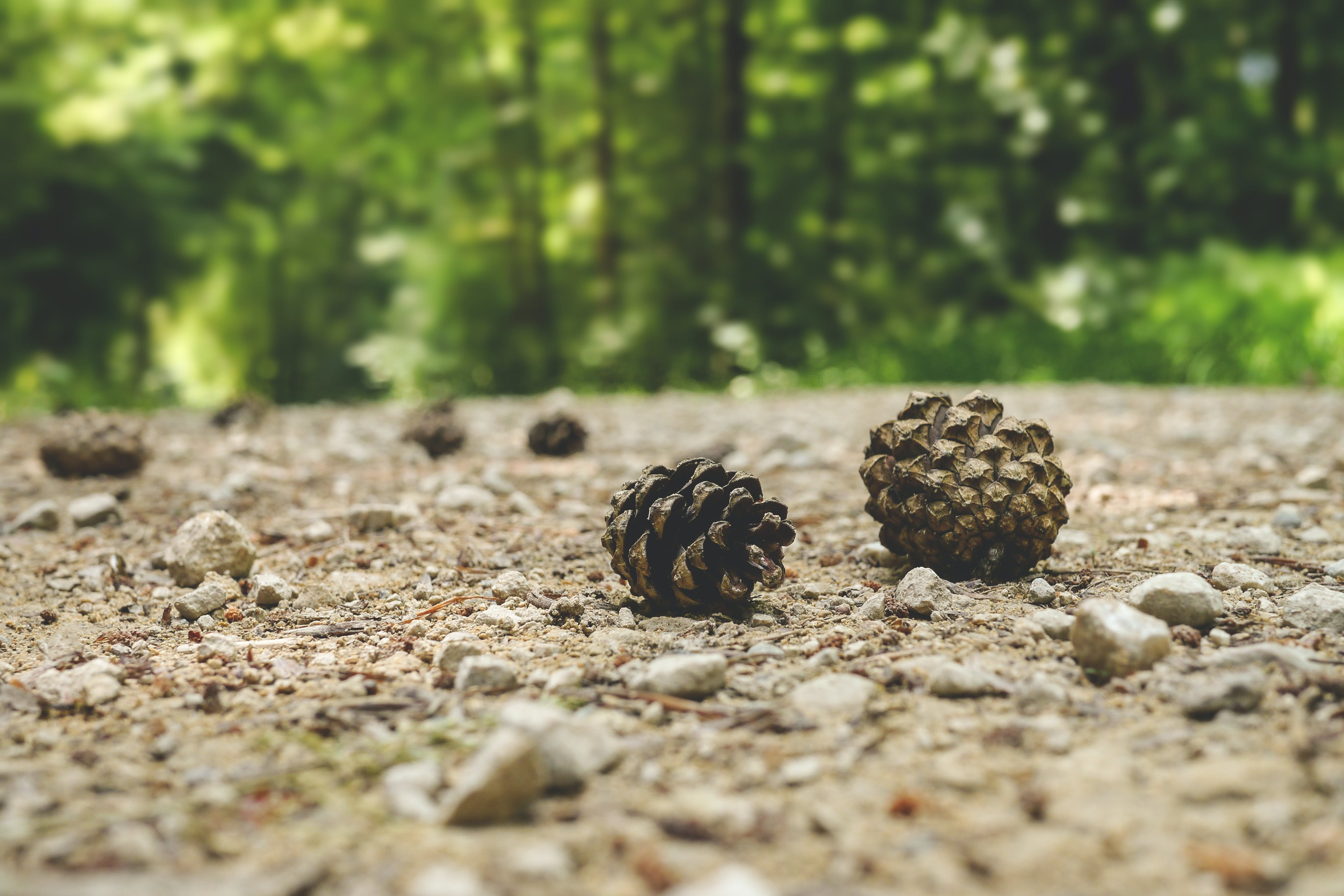 Nuts on Ground Near Trees