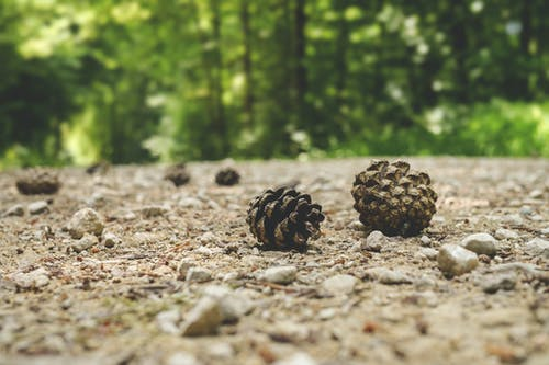 간, 나무, 돌, 솔방울의 무료 스톡 사진
