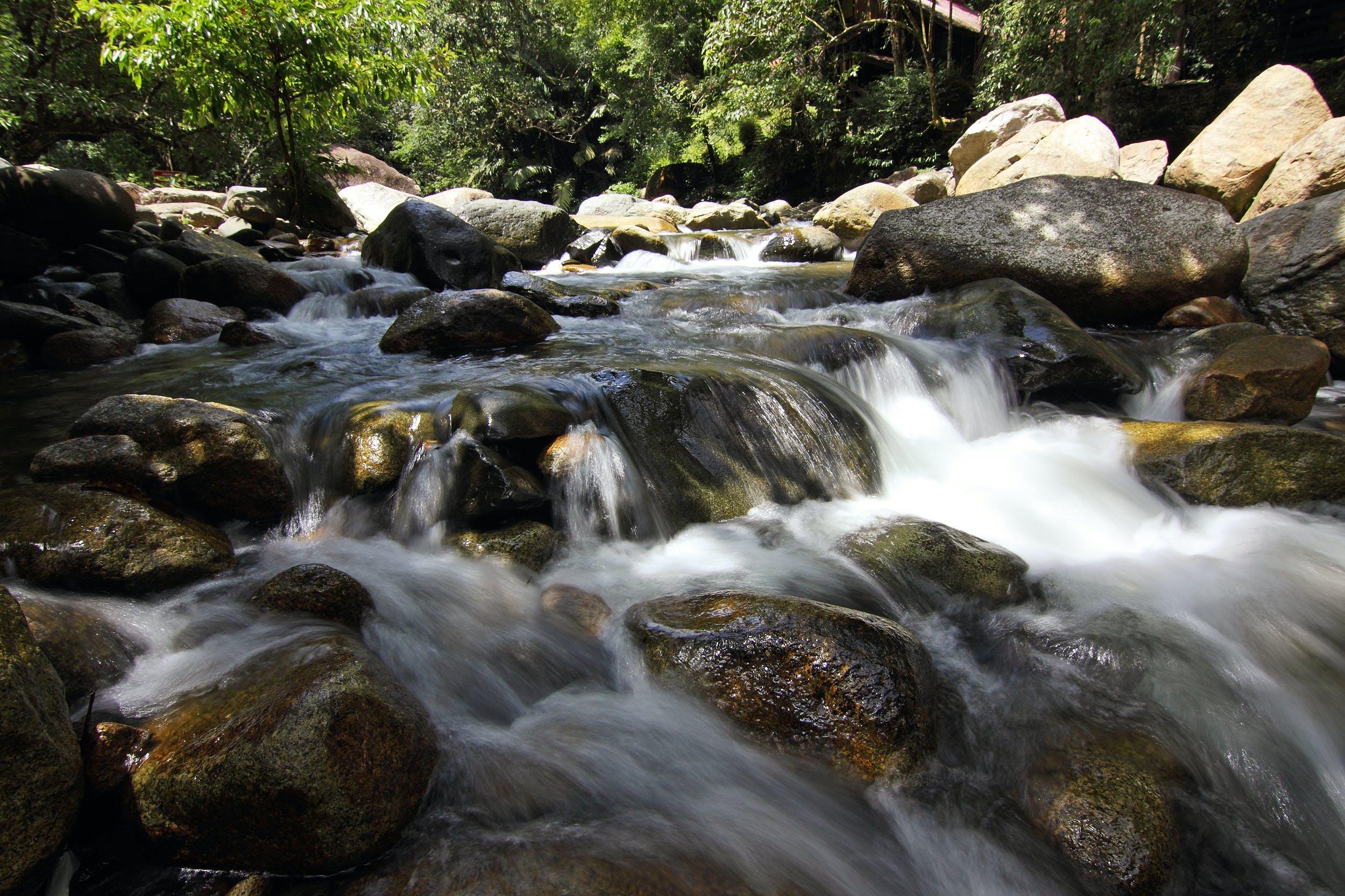 กระแสน้ำ, การเคลื่อนไหว, ตะไคร่น้ำ