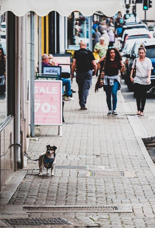 Fotos de stock gratuitas de calle, carretera, ciudad historica, comprando