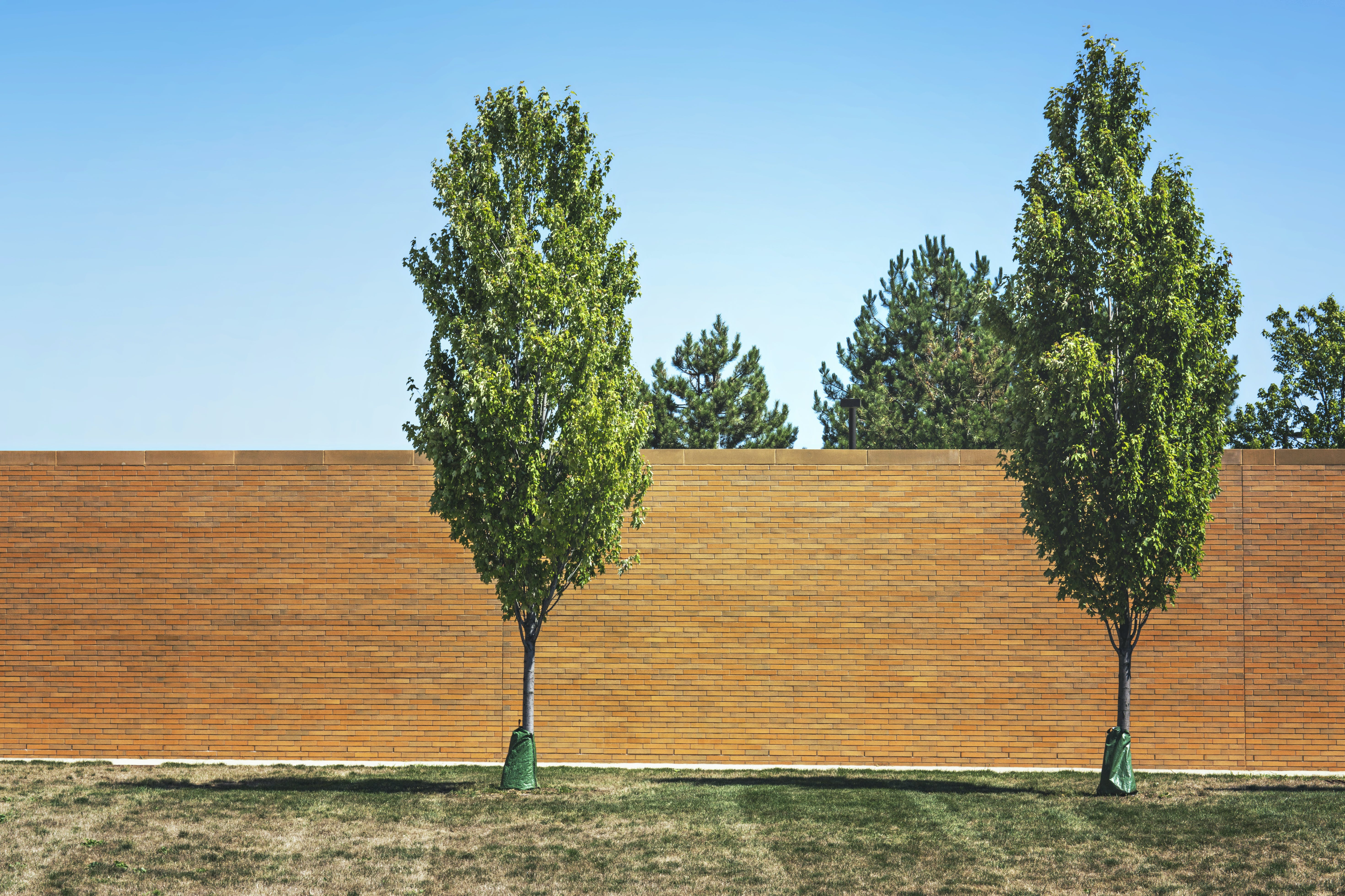 Two Green Leafed Trees Near Bricked Wall
