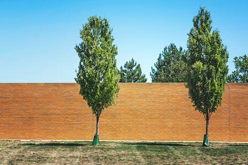 Бесплатное стоковое фото с два, деревья, кирпичи, парк