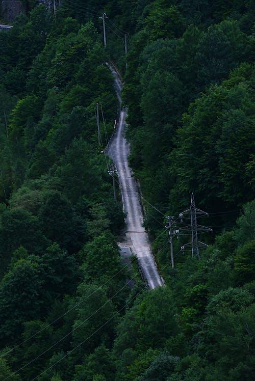 Immagine gratuita di alberi, esterno, foresta, foresta pluviale