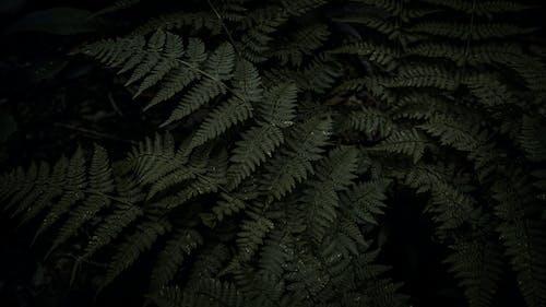 Δωρεάν στοκ φωτογραφιών με 4k ταπετσαρία, ανάπτυξη, γκρο πλαν, δέντρο