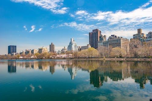 Immagine gratuita di acqua, alberi, architettura, central park