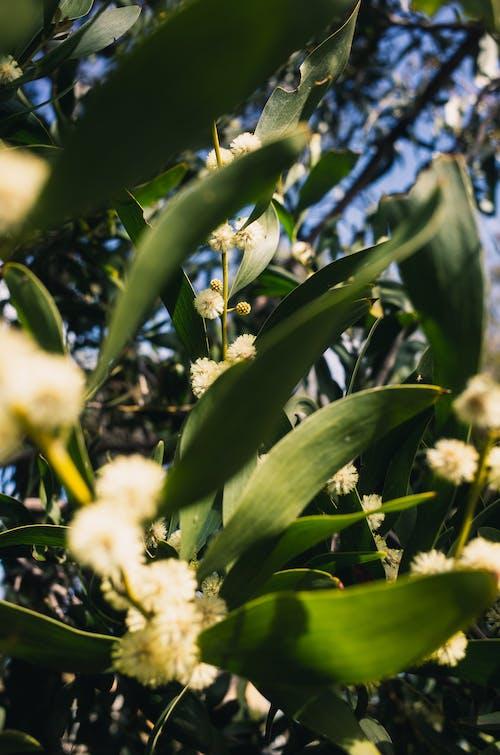 Darmowe zdjęcie z galerii z drzewo, kwitnąć, liść, liście