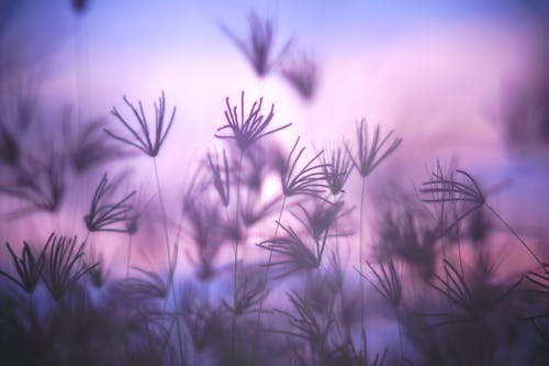 Free stock photo of abstract background, blue, grass field, plant