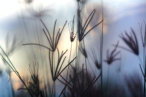 乾草, 日落, 紫色, 美丽的夕阳 的 免费素材照片