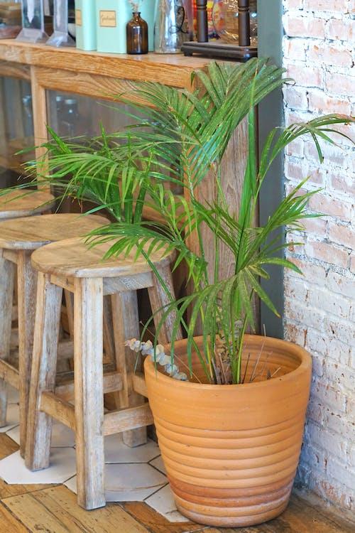 咖啡店, 咖啡廳, 工厂, 椅子 的 免费素材照片