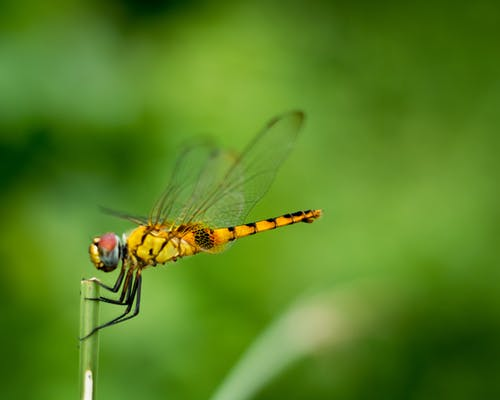 Free stock photo of dragonflies, dragonfly, green, insect photography