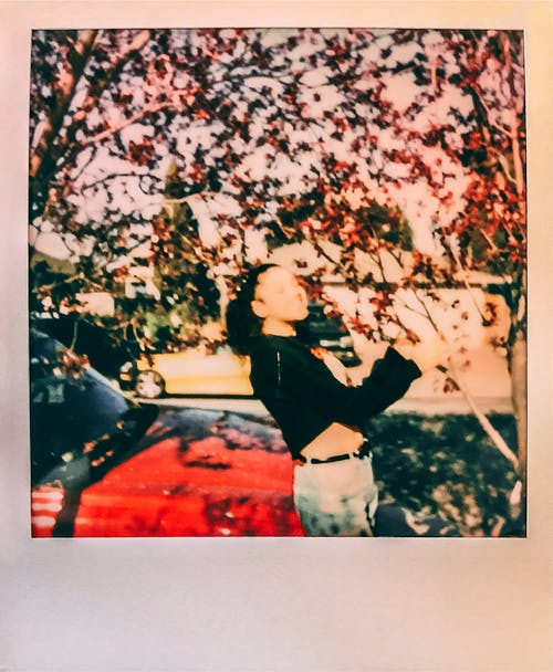 Free stock photo of bae, cherry blossoms, flowers, instant film