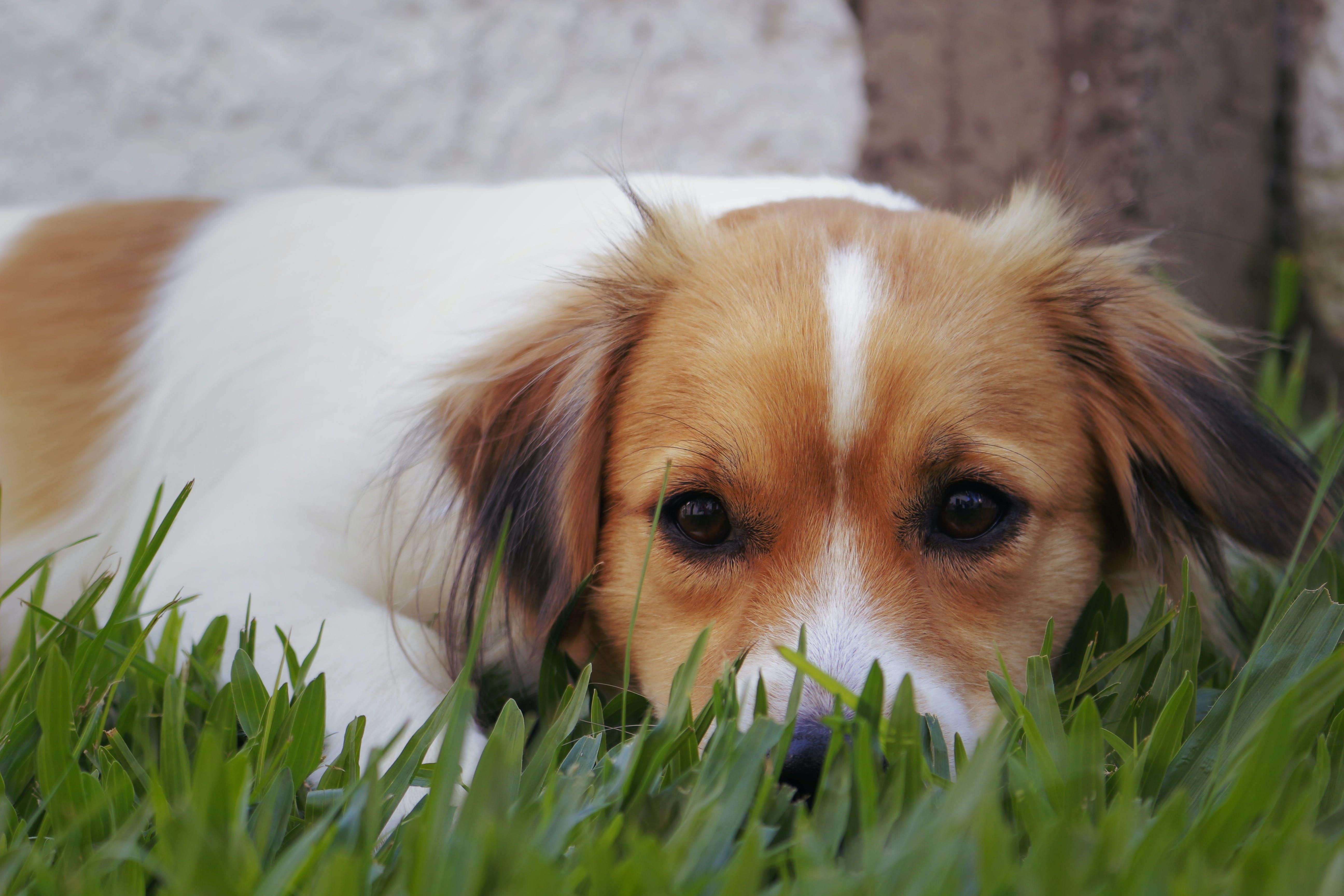 Kostenloses Stock Foto zu haustier hund, haustiere, hund, niedlich