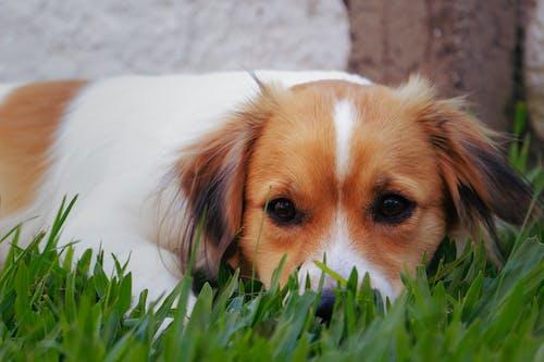คลังภาพถ่ายฟรี ของ การถ่ายภาพสัตว์, น่ารัก, สัตว์, สัตว์น่ารัก