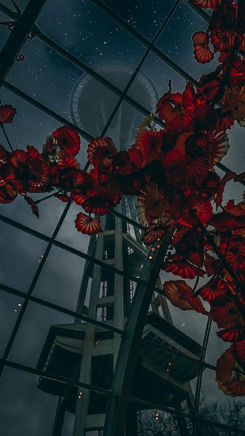 Free stock photo of beuatiful, flowers, seattle, seattle space needle