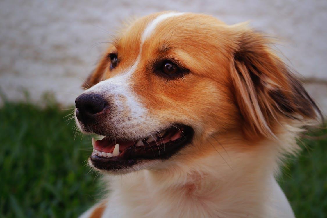 các con vật dễ thương, chó, chụp ảnh động vật