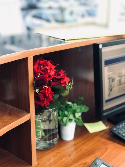 Fotobanka sbezplatnými fotkami na tému červené kvety, drevený, hĺbka ostrosti, jemný