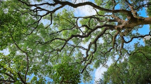 가장 높은, 가지, 경치, 계절의 무료 스톡 사진