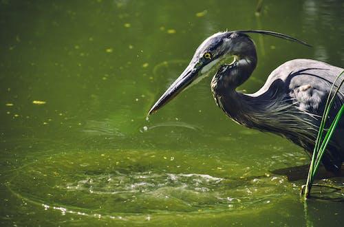 動物, 動物攝影, 戶外, 水 的 免费素材照片