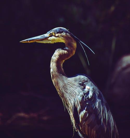 Foto profissional grátis de animal, ao ar livre, ave, aviário