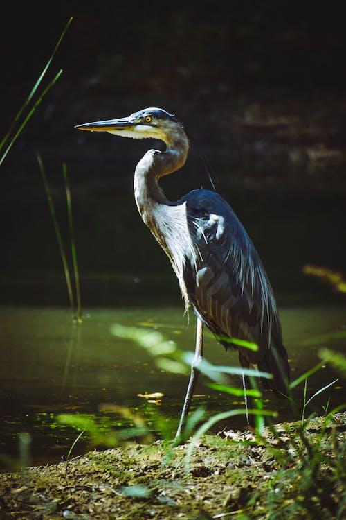 Imagine de stoc gratuită din animal, apă, aviar, cioc