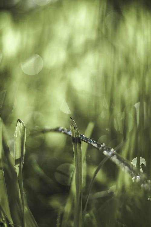 4Kの壁紙, 携帯壁紙, 森林の無料の写真素材