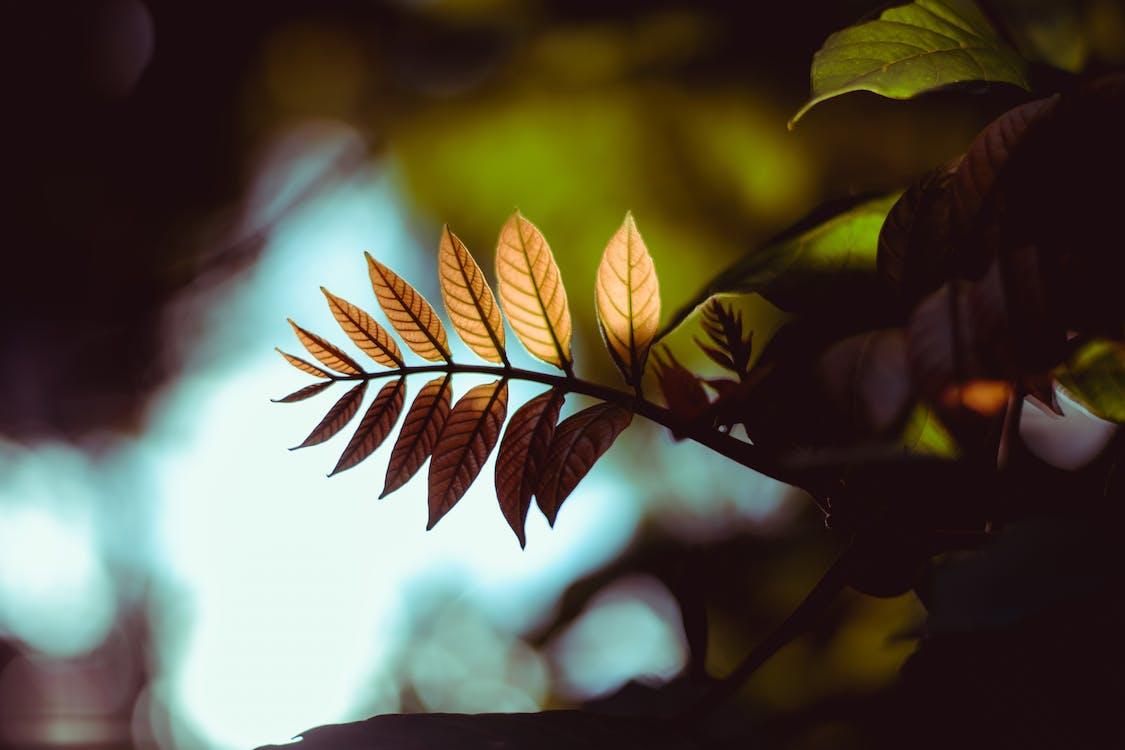 トーン, 光, 森林