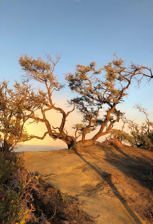 Gratis lagerfoto af bare træ, morgensol, rejse, skønhed i naturen