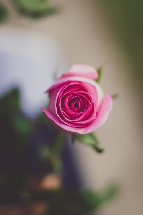 Fotos de stock gratuitas de amor, bonito, color, crecimiento