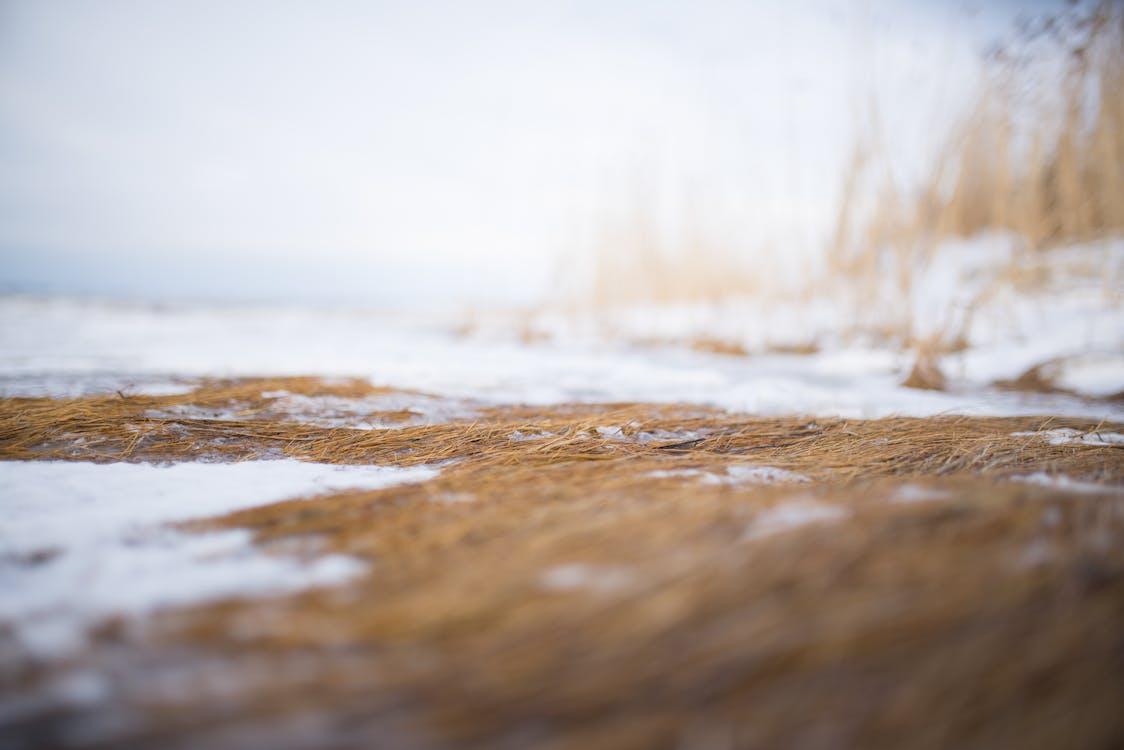コールド, 冬, 自然