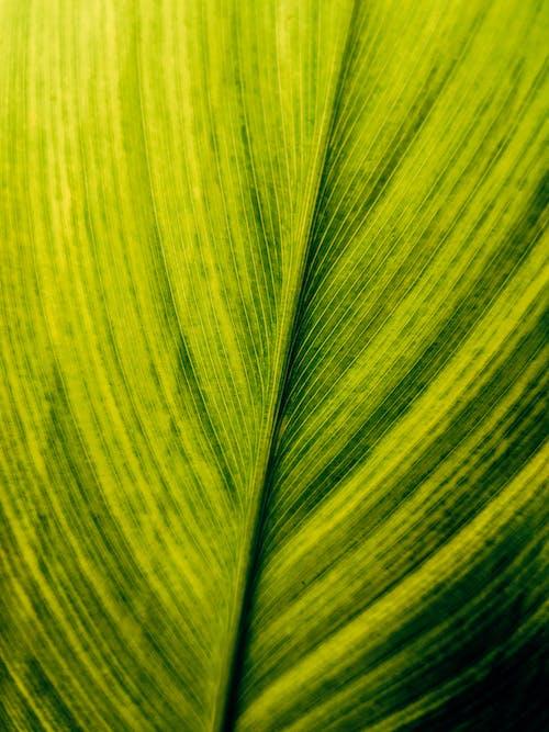 Foto d'estoc gratuïta de brillant, creixement, fotosíntesi, fresc
