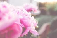flowers, sun, garden