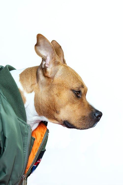 Fotos de stock gratuitas de adorable, animal domestico, canidae, canino