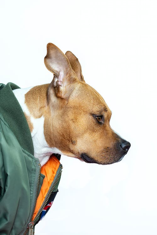 Side View Photo Of Dog