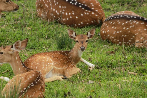 Free stock photo of chitkara, deer, forest, india