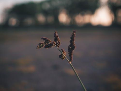 Бесплатное стоковое фото с глубина резкости, на открытом воздухе, размытый, рассвет