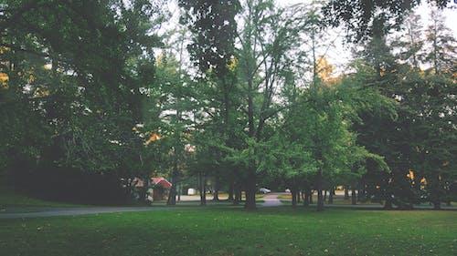 Foto profissional grátis de árvores, calafrio, calma, calmo