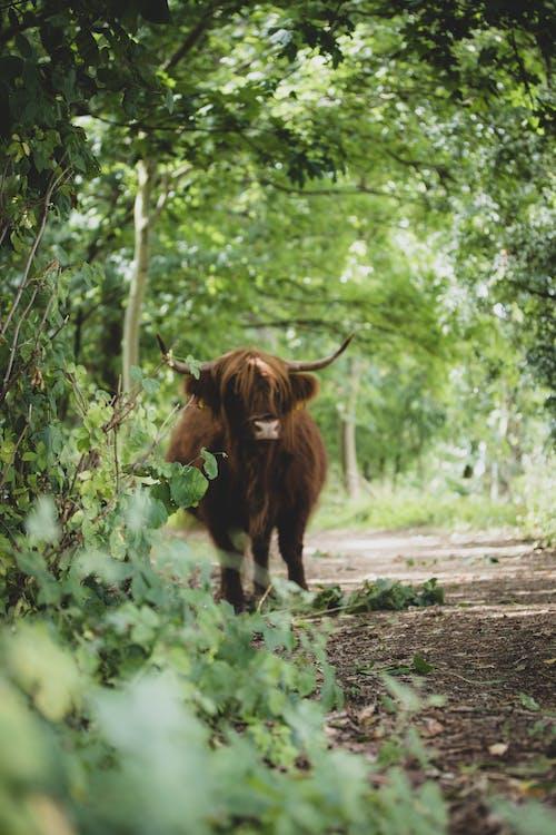 Ảnh lưu trữ miễn phí về chân dung con vật, chụp ảnh thiên nhiên, chụp ảnh động vật, con vật